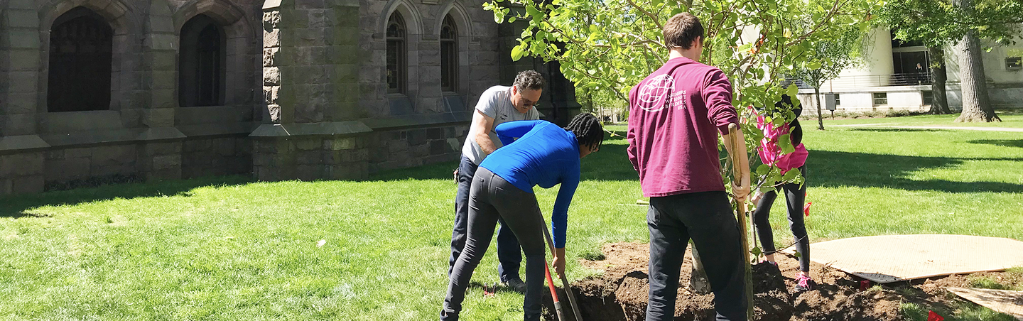 students planting tree